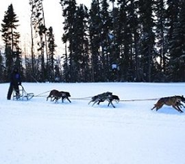 Wolf Pack Sled Dog Trail Rides